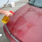 5 ข้อควรทำ เมื่อนกขี้บนรถคุณ