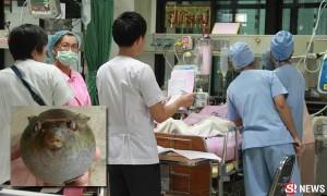 แม่ลูกกินปลาปักเป้าประทังชีวิต เกิดช็อกอาการโคม่า