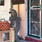 ช็อกหนักมาก เจอตัวเงินตัวทองยักษ์ ปีนประตูจะเข้าบ้าน