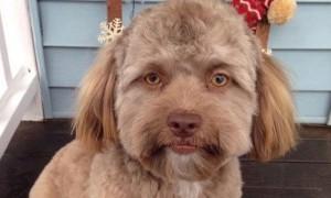 เจ้าโยกิ สุนัขใบหน้าเหมือนคน