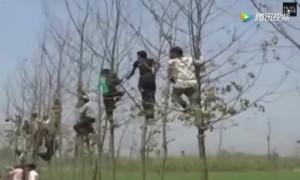 ชาวอินเดียปีนขึ้นต้นไม้ หนีเสือ ขย้ำกินคน 22 รายแล้ว