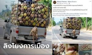 แหม่มโพธิ์ดำ ซัด ส.ส.ก้าวไกล นำภาพเก่าทรมานลิง โยงดราม่าปมกะทิไทยโดนแบน